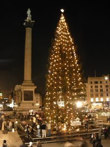 traditional christmas tree standing in trafalgar square, london