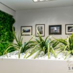 Greenery added in office space
