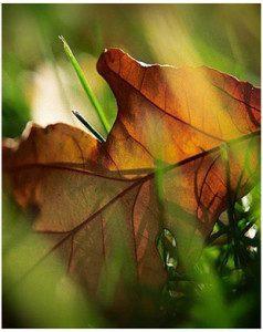 Bold Autumn Colours