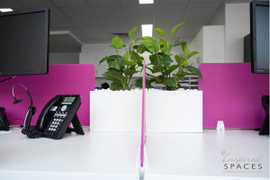 The green foliage compliments the white desk with pops of pink