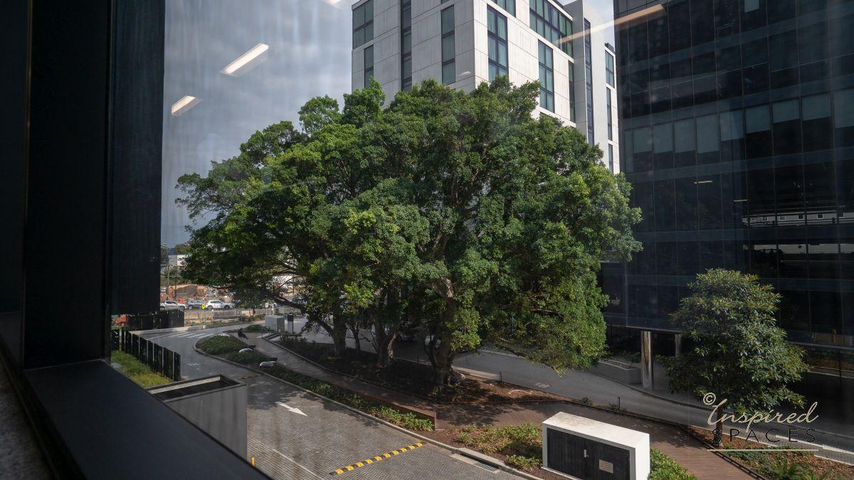 large ornate tree