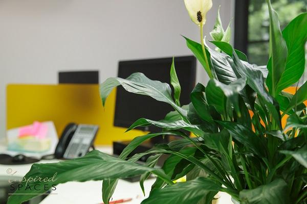 office-design-North-sydney-541