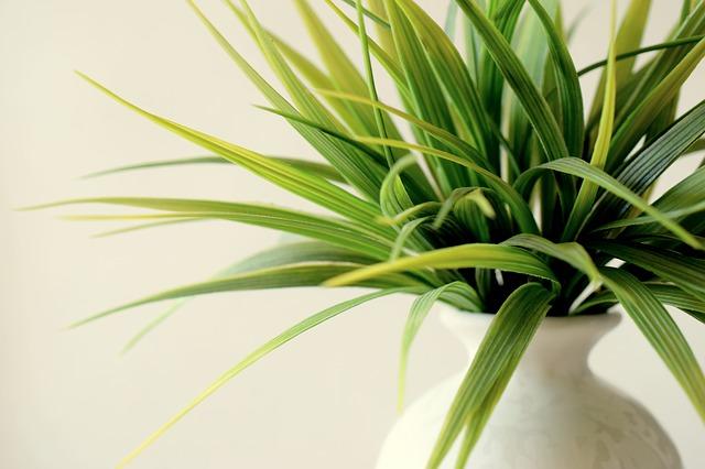 blending inside with outside using plants inside